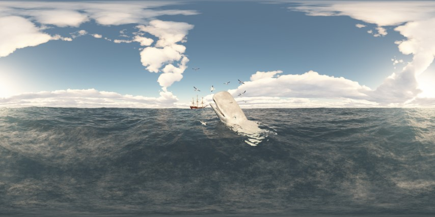 Pottwal, Seemöwen und Segelwalfänger